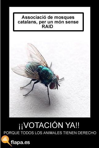 catalan,toros,corridas,moscas,raid