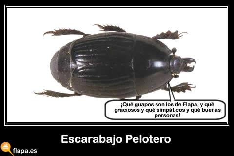 escarabajo pelotero, pelota, hacer la rosca, insecto, pamplina