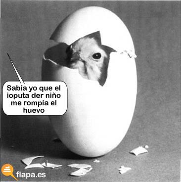 huevo, gallina, romper, docena, pollo, pamplina