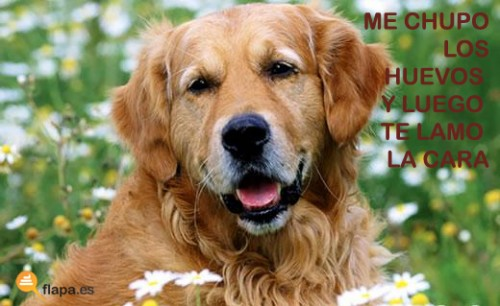 humor, viñeta, flapa, perros, mascotas